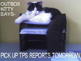 Outbox Lolcat by Patches67