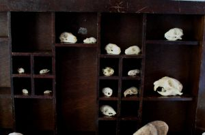 Skull Collection #3 by lupagreenwolf