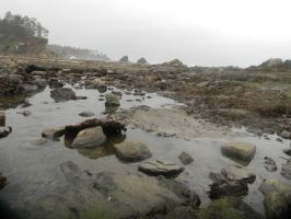 Tide Pools 2 by theRyanna