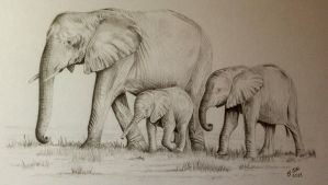Elephant Family by Ned-The-Hat