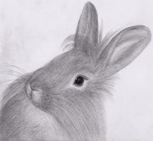 Rabbit by Becky125