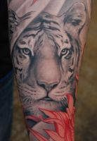 Done tiger by KeLLoGsX