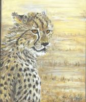 cheetah 1 by acrylicwildlife