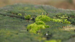 little moss world in january by Nexu4
