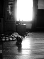 Little Dog by Speacial-J-Cerial
