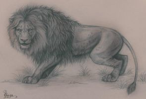 Natural lion by OmegaLioness