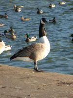 Chasewater 2012 by azrealdrogan
