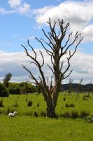 Dead Tree Stock by jojo22