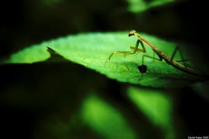 Mantid 2 by homedoggieo