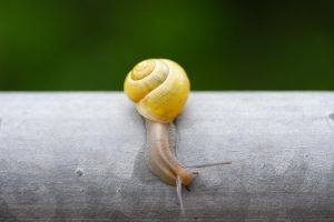 Little yellow snail by sportytomm