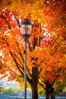 Fall Project #2 by nmpphotography