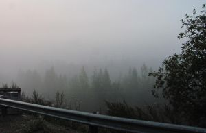 Misty Morning by Daghrgenzeen