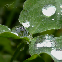 Green, wet world. by paajonk