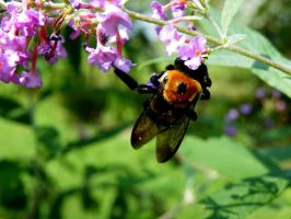 Busy Bee by Dark-and-Dreamless