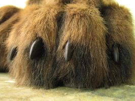 Macro Bear Paws by Beetlecat