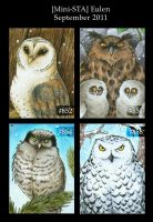 Owls - ATC by Merinid-DE