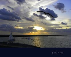 Feel Free by Buble