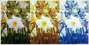 Narcissus by doredore