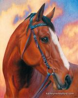 Colour Pencil Horse Portrait - Bailey by KathrynWhiteford