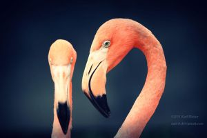 Flamingos by Karl-B