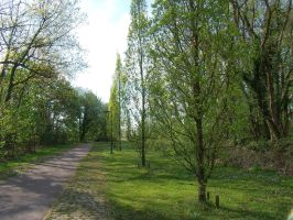 Path along trees in Belgium 1 by BMFMhero1991