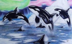 Spirit of the Orca by SymphonicMischief95
