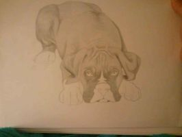 Boxer Puppy by unega-wahya