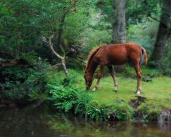 New Forest Magic by Ellie-S