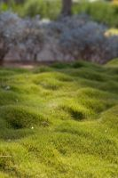 Greeny grass by ign0me