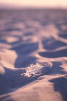 Feather in Sand - Vertical by shagie