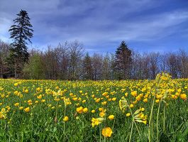 Lawn in spring by rade32