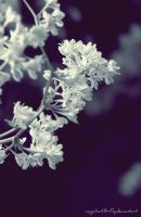 Frozen Flowers by magicbut3rfly