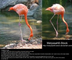 Flamingo Stock 6 by Melyssah6-Stock