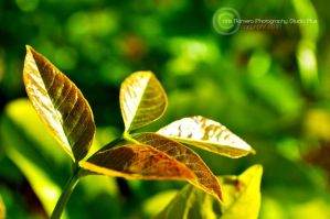 Leaf Plant by PrestigeGraphics