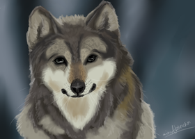 Grey Wolf [Realism Practice] by avianAbstraction