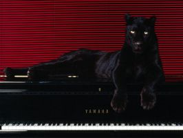 Big Cat on Grand Piano by ScubaproNicRegler