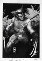 ULTIMATE ORIG. WOLVERINE COVER by simonebianchi