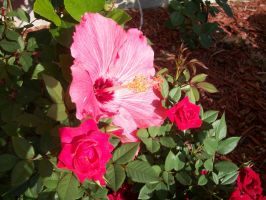 Hibiscus and Tea Roses by ReineStrife