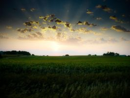 Sunrays Over Cornfield by tjsviews