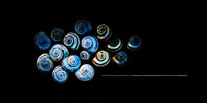 16 Snails by DREAMCA7CHER