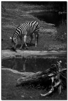 Black and White x 3 - II by LoneWolfPhotography