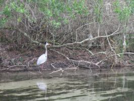 041 Heron by crazygardener