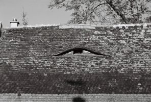 roof by gangstergazelle