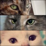 Collage: Cat eyes [ 2 ] by xsilver-cloudx