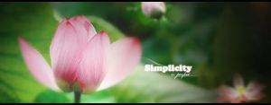 simplicity sig by flavia16