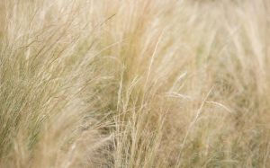 Grass by tpphotography