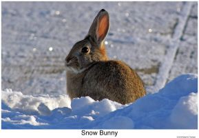 Snow Bunny by hunter1828