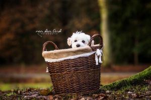 Little fluffy puppy by IllusionoftheDay