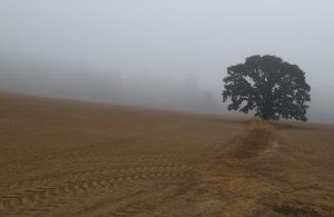 The Road to Lone Oak is Foggy. by boxcamera