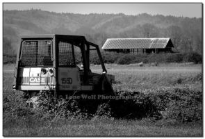 Out to Pasture by LoneWolfPhotography